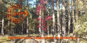 bogensportblog-de-gross-wasserburg-5-spreewaldberg-turnier-2016-beitragsbild
